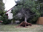 Hurricanes can affect states far inland. Harsh winds associated with the remnants of Hurricane Ike knocked down trees, damaged buildings, and snapped power lines across Kentucky in September, 2008.