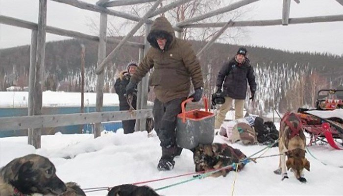 Snowmobile strikes Iditarod teams, kills dog