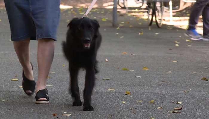 Paralyzed dog walks again after life-threatening injury - azfamily.com 3TV   Phoenix Breaking News, Weather, Sport
