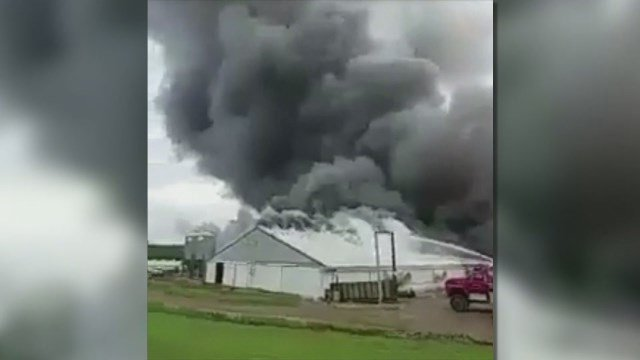 Fire in confinement building kills some 5,000 pigs in IA