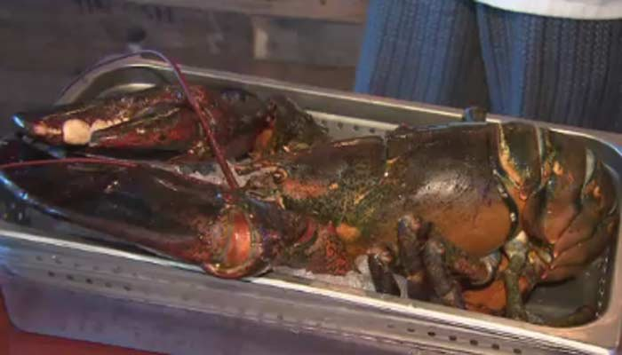 A 110-year-old lobster named Larry who saved from the dinner table has died. (Source: WPLG/CNN)