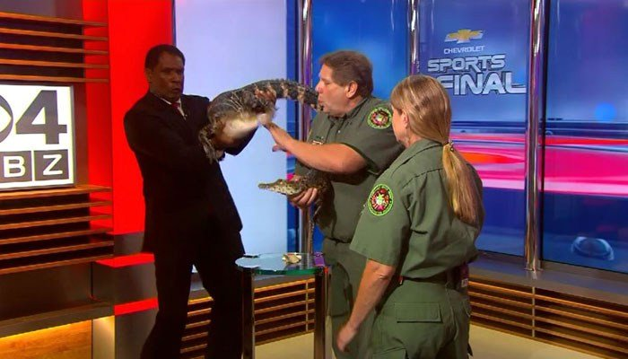 TV Anchor Freaks When Alligator Starts Flailing In His Hands