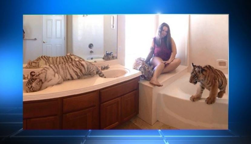 4 tigers found living in woman's home