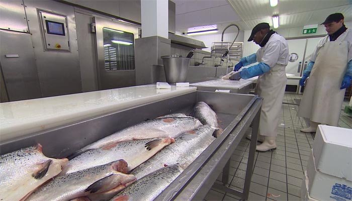 US Salmon can contain tapeworm which can grow 30 feet long