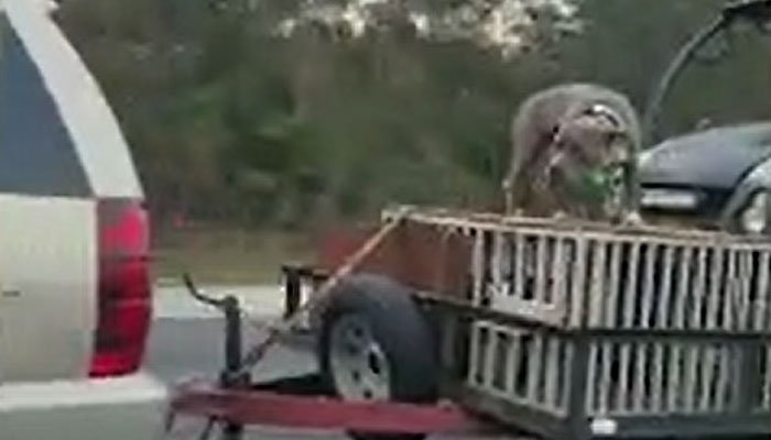 Video shows dog riding on cage behind SUV on I-95
