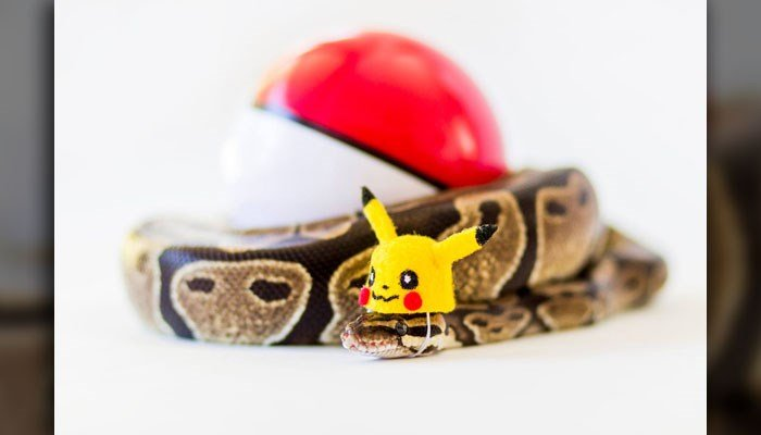 Snakey dressed as Pokemon. (Source: Facebook/@SnakeyPython)