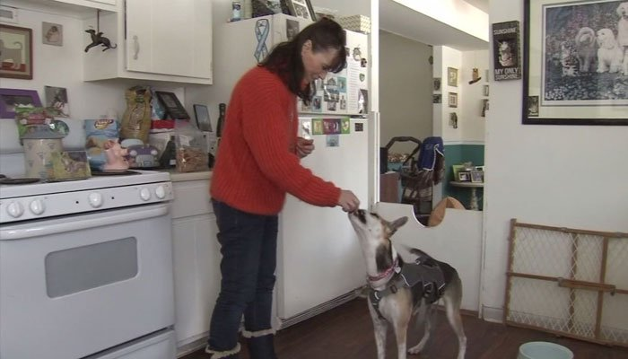 Two friends raised money to bring a mutilated dog to the United States, and to pay for surgery it needed to extract teeth and repair its tongue. (Source: WPVI/CNN)