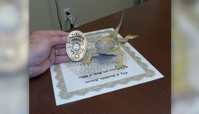 Bearded dragon 'sworn in' as AZ police officer