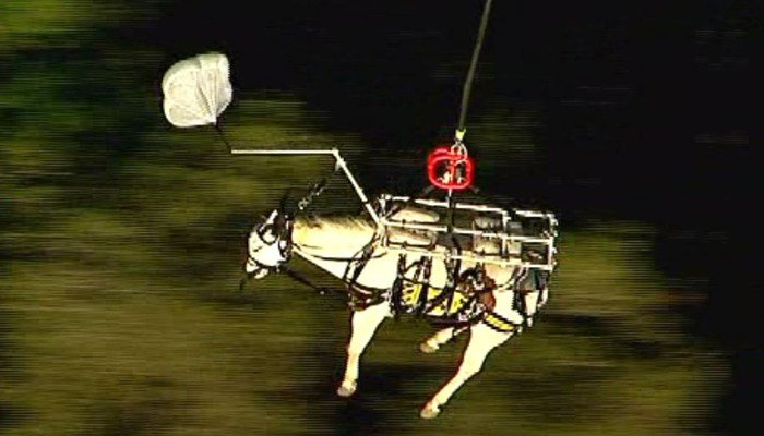 Crews use helicopter to rescue horse from California ravine