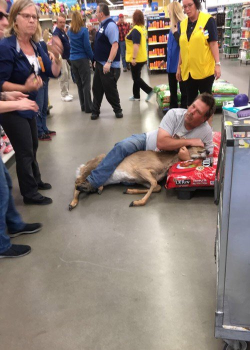 A young deer met his match in shopper Tom Grasswick during an early morning shopping run to a Walmart in Minnesota. (Source: Submitted photo)