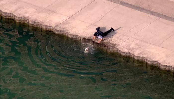 Chicago police officer Juan Farris reaches down to pull up a frightened dog who fell into Lake Michigan early Tuesday. (Source: CNN)