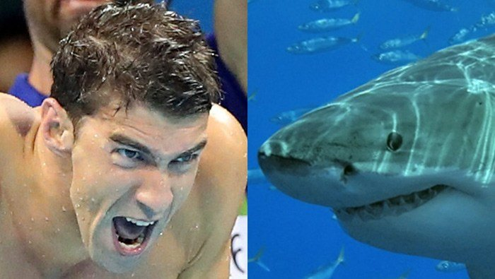 Phelps vs. Shark. (AP/Lee Jin-man/Terry Goss/Wikipedia)
