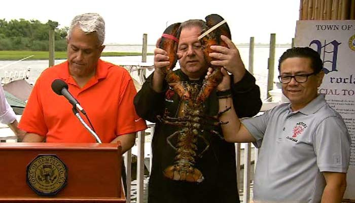 The 22 pound lobster is 132 years old. (Source: News 12 Long Island/CNN)