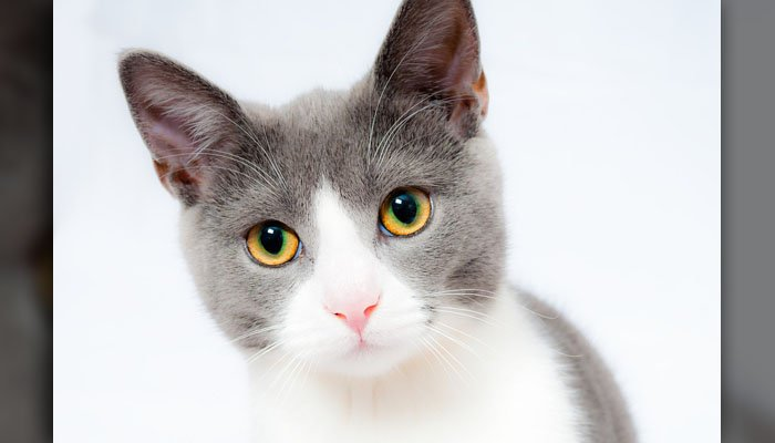 A composer is releasing an album of songs meant for cats and humans to enjoy together. (Source: Pixabay)
