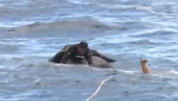 It took several boats a team of Navy divers and officials with Sri Lanka's Department of Wildlife to rescue the elephant