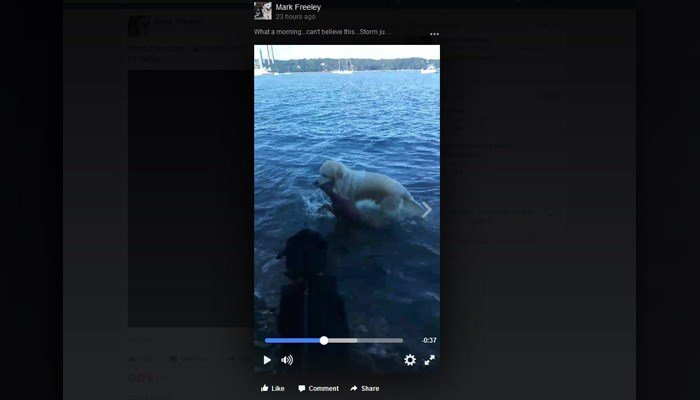 Video shows dog rescuing baby deer floating in waters off Long Island