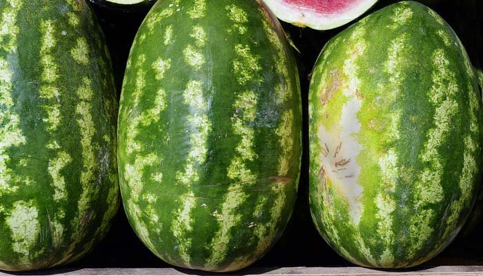 A firefighter trainee brought a watermelon as a gift to his new colleagues at a fire station that is 90 percent black. (Source: Pixabay)
