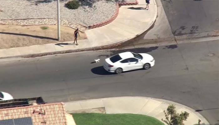 Los Angeles police said the driver was wanted for burglary and carjacking. (Source: KTLA/CNN)