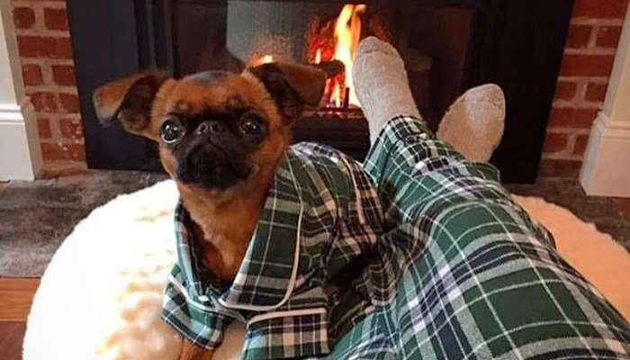Matching human and dog pajamas come in four designs, two plaid, two solid. (Source: Facebook/Fabdoginc)