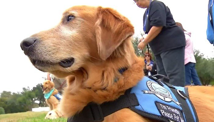 The dogs have spent time with victims' families, survivors and law enforcement. (Source: KABB/WOAI/CNN)