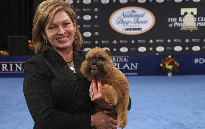 He won Best in Show at the National Dog Show, but it's Newton's status as a Chewbacca lookalike that has people still talking about him on social media.(Bill McCay/NBC via AP)