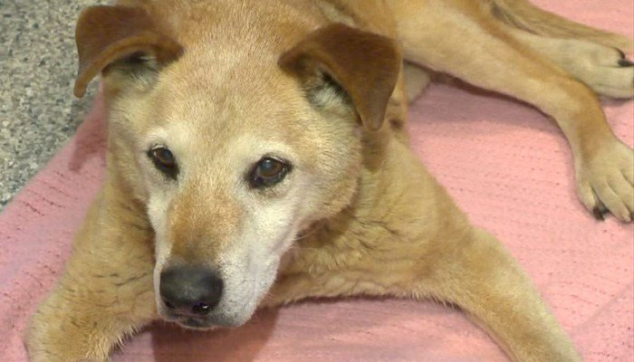 The dog has been through a lot. Authorities believe he was hit by a car, then frozen to the ground, yet somehow he survived. (Source: WJRT/CNN)