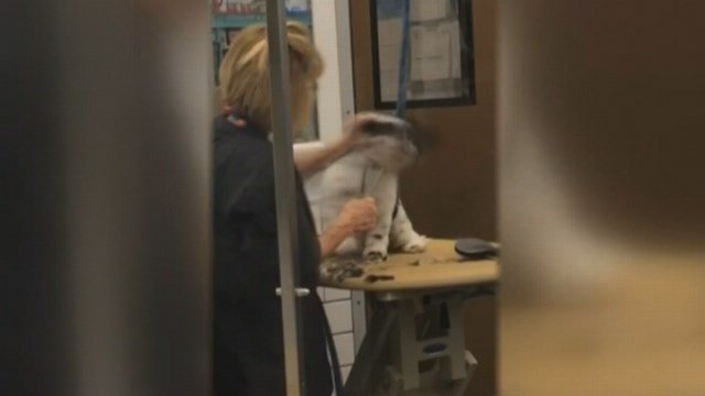 An animal lover stands up for a dog she feels is being mistreated at a Houston PetSmart. The incident was caught on camera. (Source: KTRK, Terah Leder, Eyewitness.)