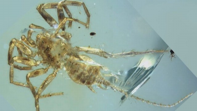 Scientists say the species crawled around southeast Asia alongside ancient spiders for millions of years. (Source: CNN)