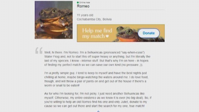 A lonely Bolivian water frog is seeking his mate on Match.com to save his species. (Source: CNN)