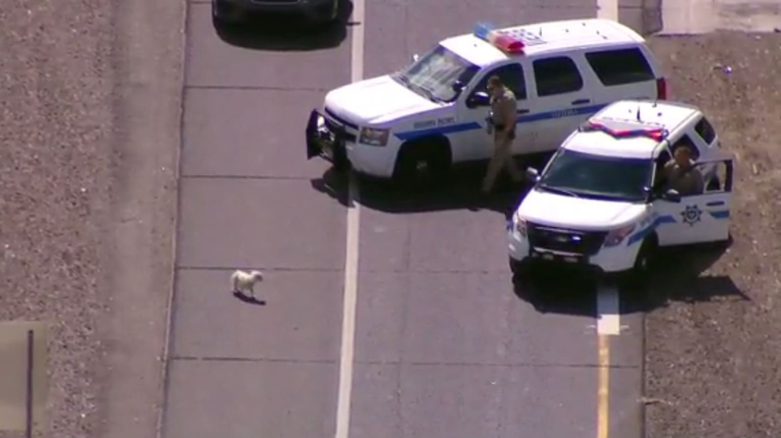 Loose dogs halt traffic on busy Arizona highway