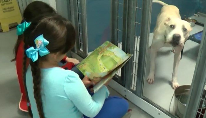 About 80 first graders practicing their reading skills to the most patient audience of all. (Source: KSNV/CNN)