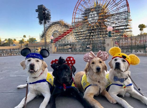 The pups patiently posed for photos during their trip to Disneyland. (Source: CANINE COMPANIONS FOR INDEPENDENCE)