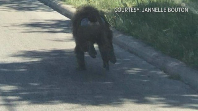 Though four baboons did escape, officials said everything is under control and nobody has anything to worry about. (Source: Dorian Reyna)