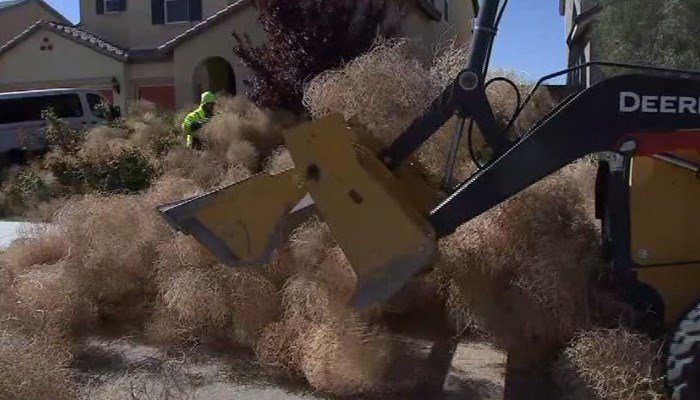 Tumbleweed takeover: High winds leave neighborhood overrun