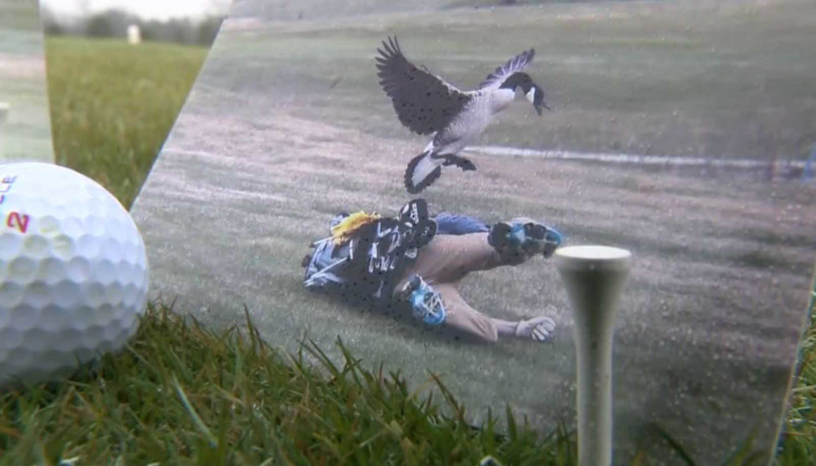 Viral photos show MI high school golfer attacked by goose