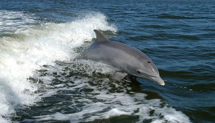Dolphin bodyslams paddleboarder off board in Australia