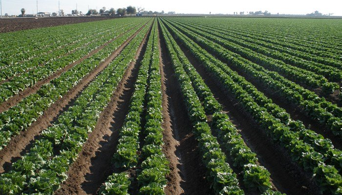 The outbreak originated with romaine lettuce grown in the Yuma, AZ, area. (Source: Pixabay)