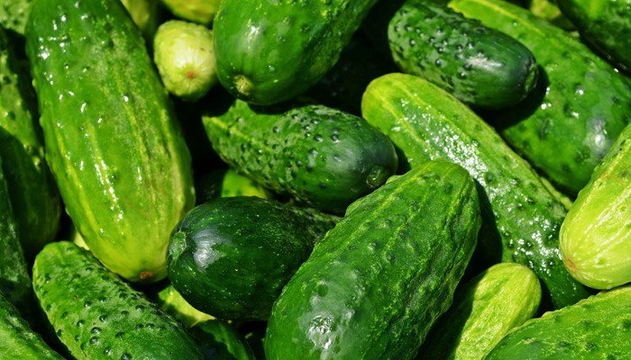 A trucking company ended up with a massive load of cucumbers after an order was refused. (Source: Pixabay)