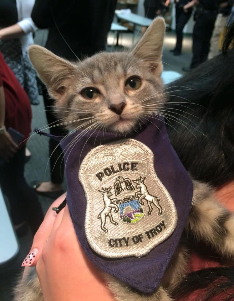 Apart from potentially keeping the rodent population down, Donut will serve as a community relations cat. (Source: Troy PD/Facebook)