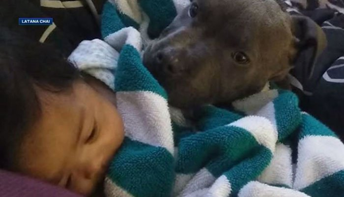 Baby Masailah and the 8-month-old pit bull puppy have always had a special bond. (Source: Latana Chai/KCRA/CNN)