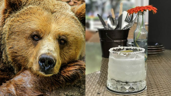 A California bear had an enjoyable Friday, complete withan adult beverage, a dip in the hot tub and a nap.(Source: Pixabay, file)