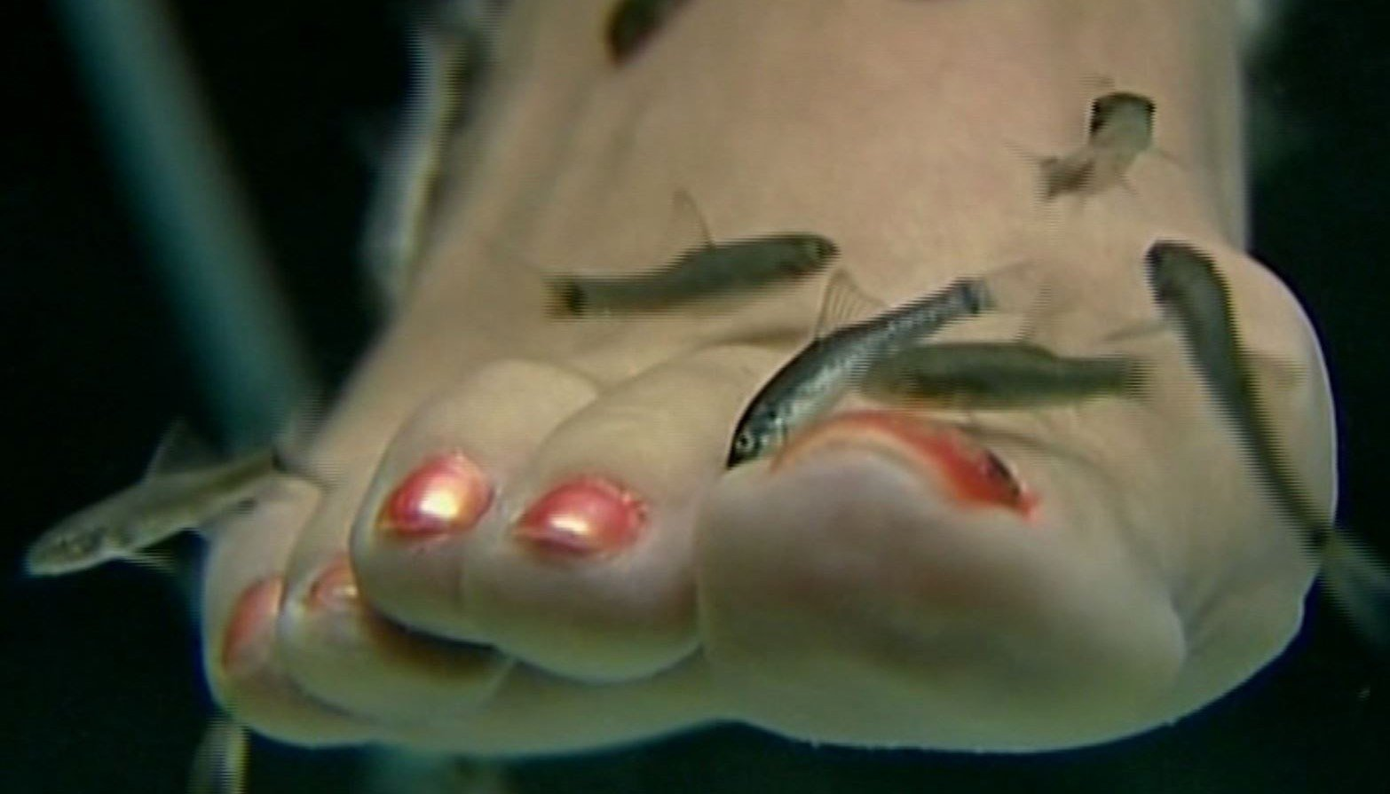 Tiny fish called Garra rufa eat dead human skin making for a sort of pedicure