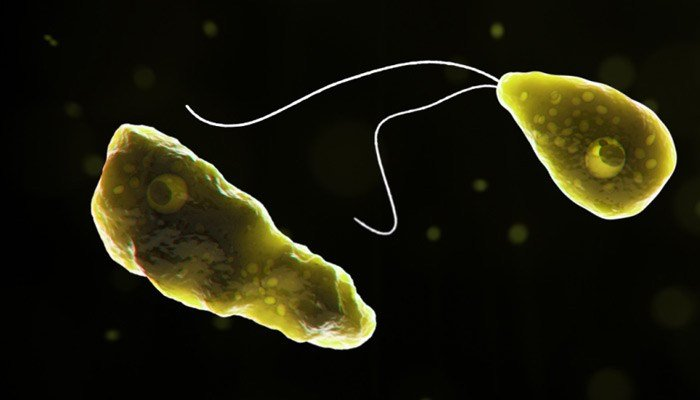 The rare but devastating infection is found in warm freshwater bodies of water. (Source: CDC)