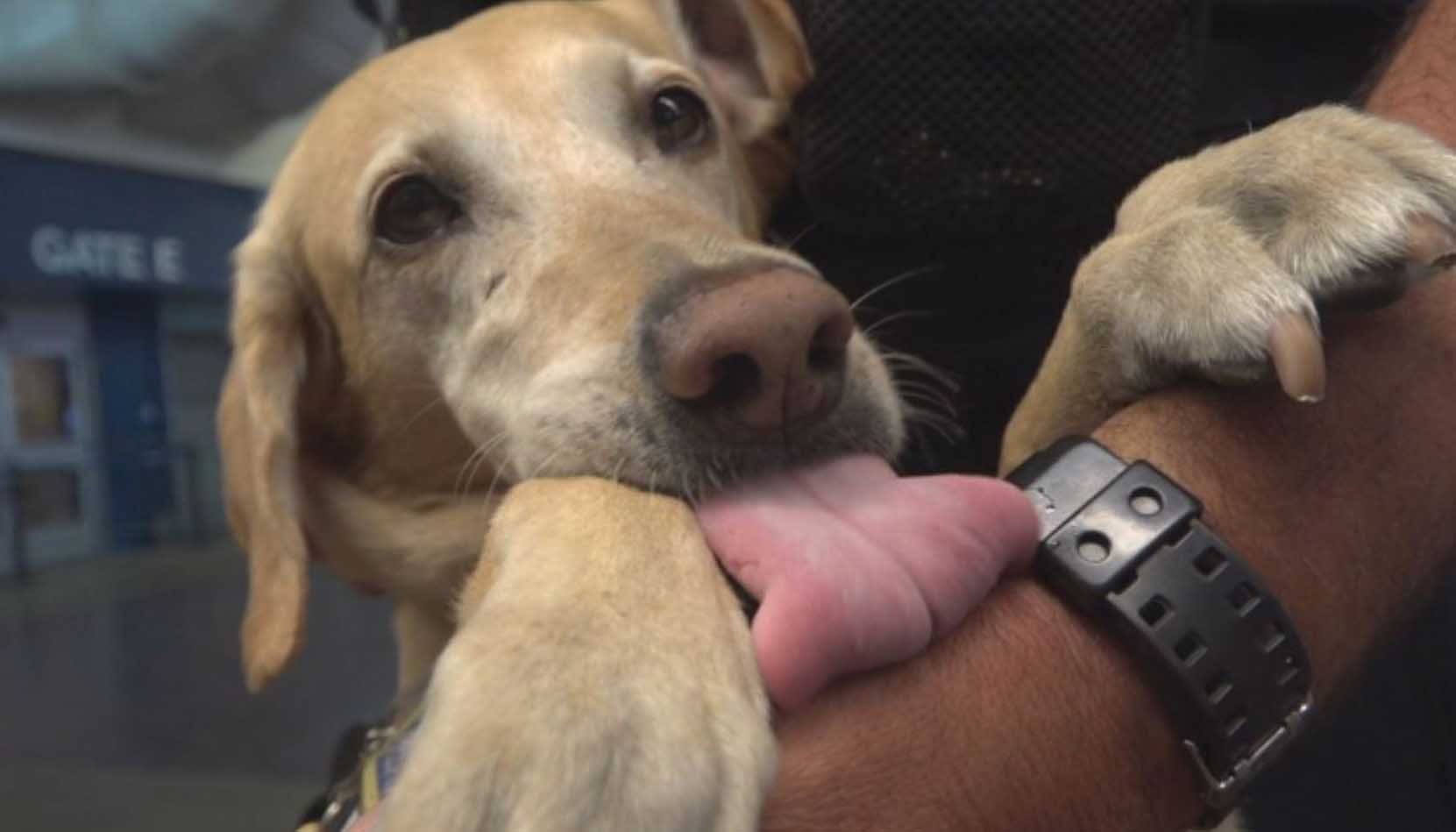A retired military dog who now works as a bomb-sniffer at a train station is nominated for a prestigious award for saving thousands of lives in Afghanistan. (Source: WJLA via CNN)