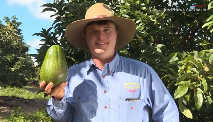 These giant avocados are originally from South Africa, but are now being grown in Australia. (Source: Nine News Australia/CNN)