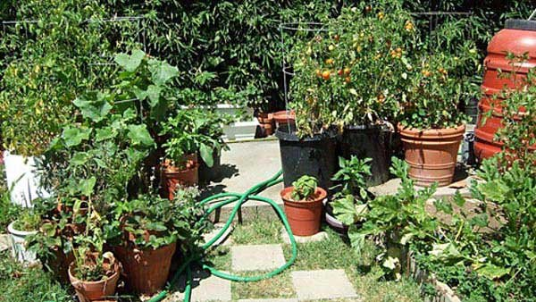 Food grown in containers continue to supply the gardener with vegetables through the summer. (Source: Earthworm/Flickr)