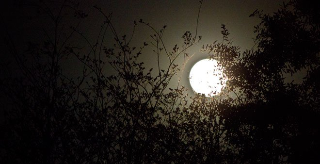 The March 19, 2011 supermoon. (Source: Caitlin Williams)