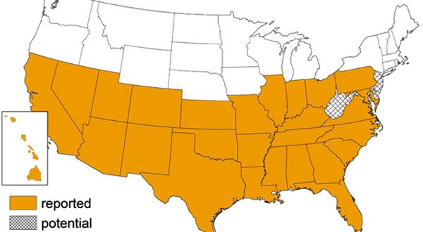HIghlighted states show the occurrence of the triatomine bug in the U.S. (Source: CDC)