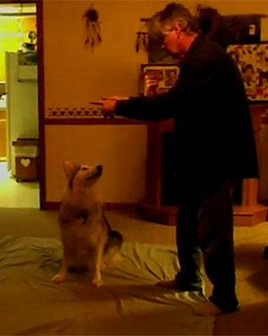 "Fred Dixon taught his 6-year-old dog sign language, and now he is a master in the ""unspoken art"" of fetching bones and blankets. (Source: YouTube)"