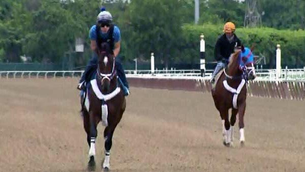 I'll Have Another will not have a chance to earn horse racing's Triple Crown at the Belmont Stakes on Saturday. (Source: CNN)